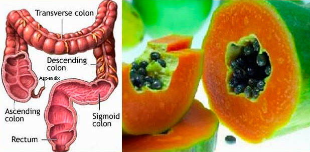 La papaya y su similitud con los intestinos